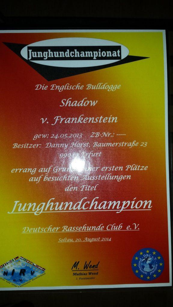 "Junghunde - Championat ""Shadow v. Frankenstein"""